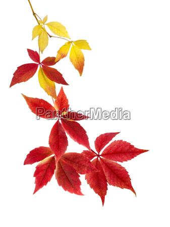 beautiful arrangement of autumn leaves