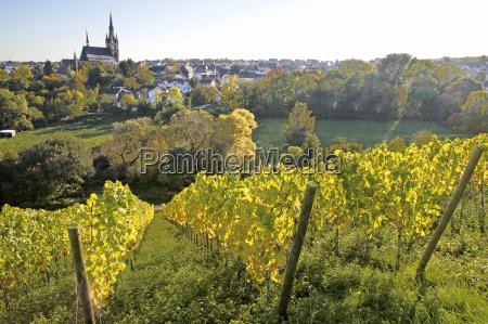 view from the vineyard on kiedrich