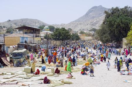 kamelmarkt in keren eritrea