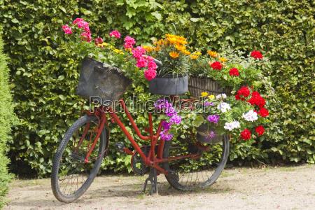 acuerdo jardin flor planta ruedas cosecha