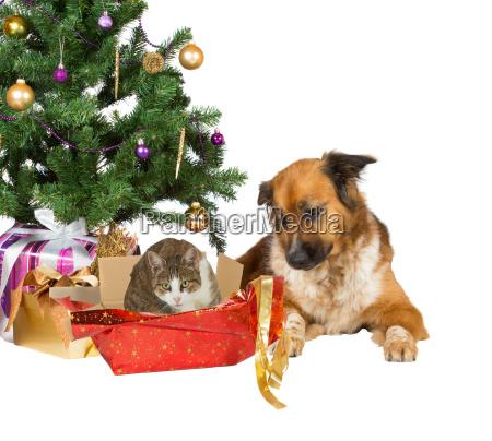 katze und hund eroeffnung weihnachtsgeschenke