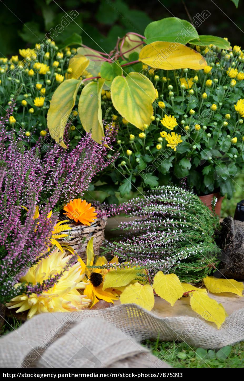 Herbst garten pflanzen wohn design - Herbst garten ...