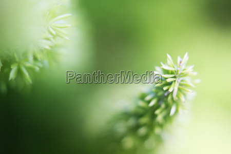 background scattered plants