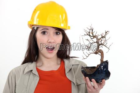 construction worker holding a dead bonsai