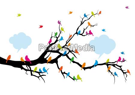 color birds on tree