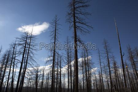 verbrannte wald in bryce canyon nationalpark