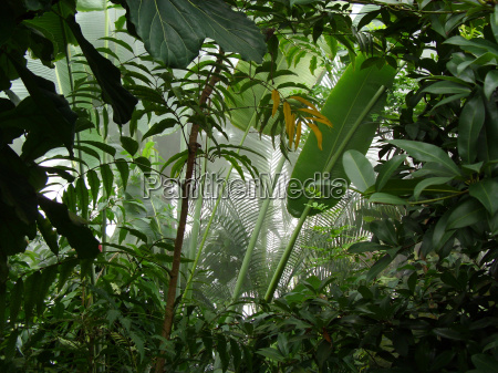 blick in den tropischen regenwald
