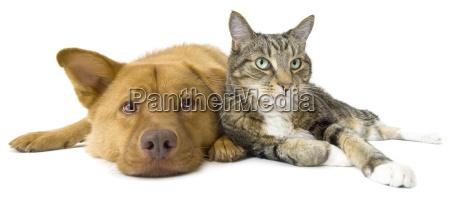 hund und katze zusammen weitwinkel