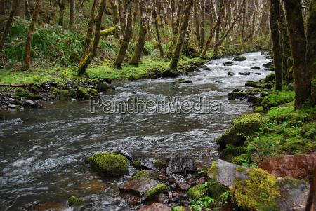 baum bach landschaftsbild landschaft natur stroemen