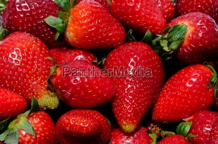 frucht obst roh erdbeere ganze rot