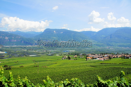 wine landscape in south tyrolrn