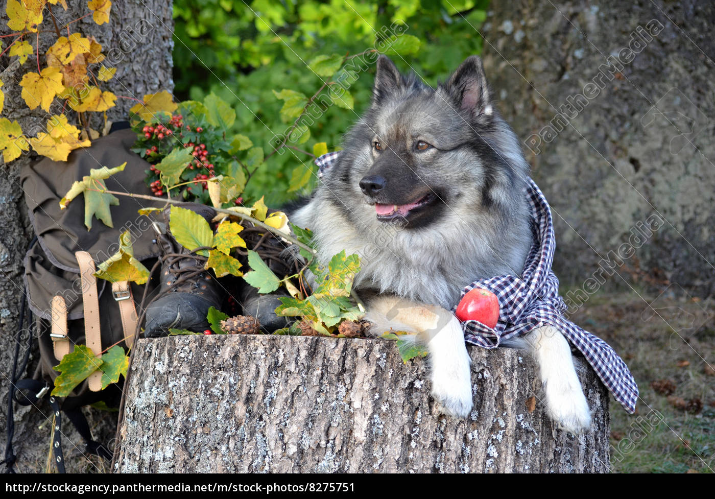 Lizenzfreies Bild 8275751 Hund Herbst Pause Wandern