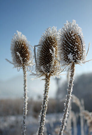 winter stream ice teasel fence fence