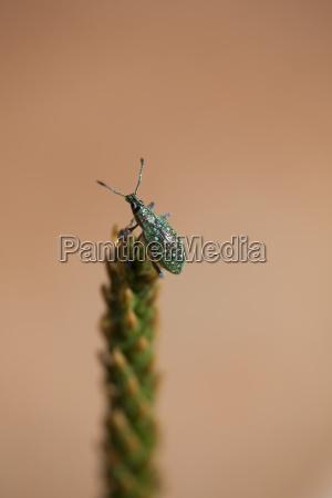 close up von insekten auf einem