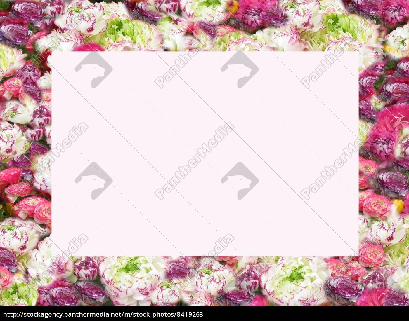 Blumenrahmen, bunte Ranunkeln - Stockfoto - #8419263 - Bildagentur ...