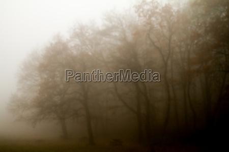 on a misty forest landscape