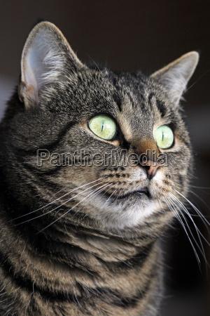 an interested katzenblick wide eyes