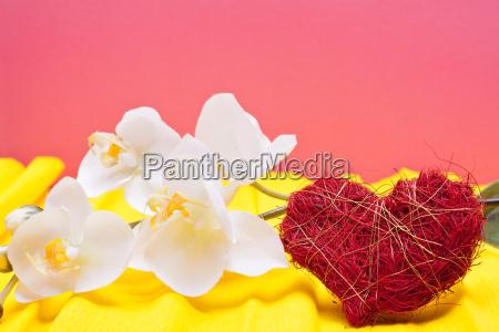 farbiger hintergrund mit orchidee und herz