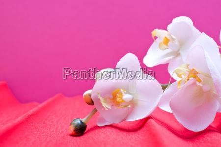 rosa hintergrund mit orchidee und textfreiraum