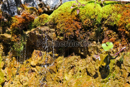 waters stream source sponge spring water