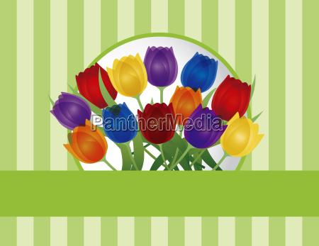 blume blumen pflanze korb ostern tulpen