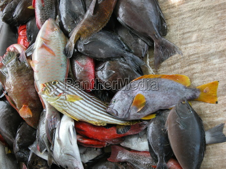 frische fische seychelles seychellen