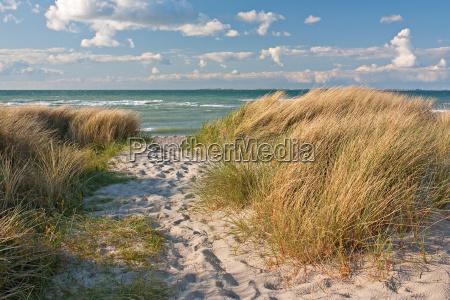 path through dunes on the beach