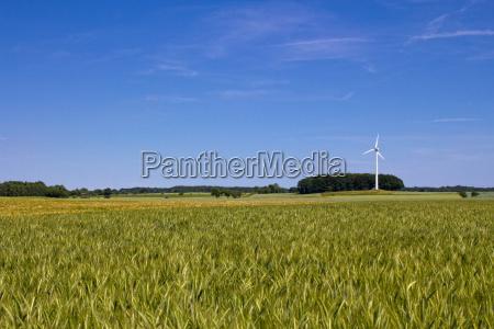 field pinwheel and blue sky