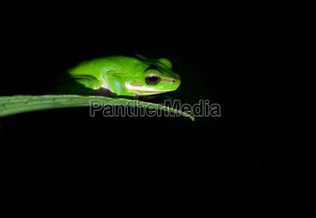 baum amphibie frosch zwerg rasen gruenflaeche