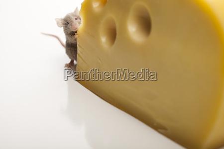 essen nahrungsmittel lebensmittel nahrung tier haustier