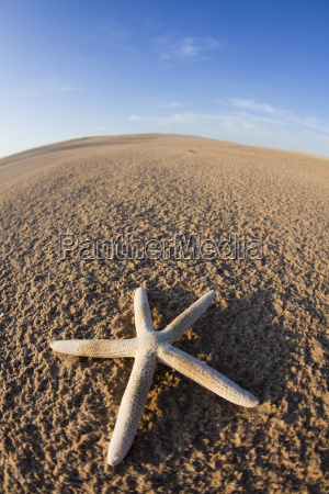 seastar on a beach holidays