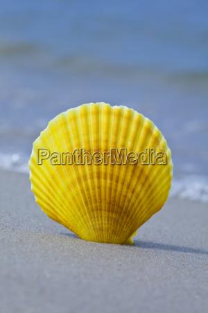sandy background beach shells