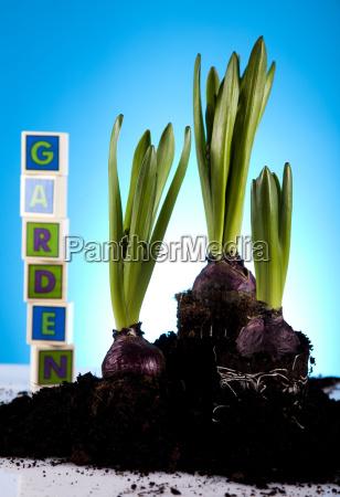 blatt baumblatt garten blume pflanze gewaechs