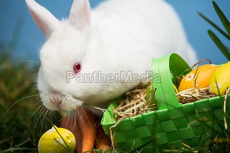 weisses kaninchen neben ostereier im gruenen