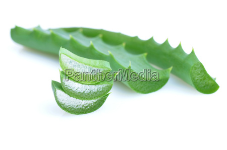 leaf of aloe