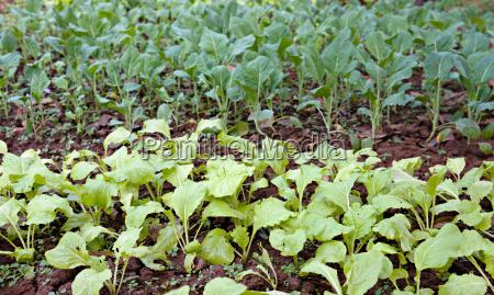 essen nahrungsmittel lebensmittel nahrung garten landwirtschaft