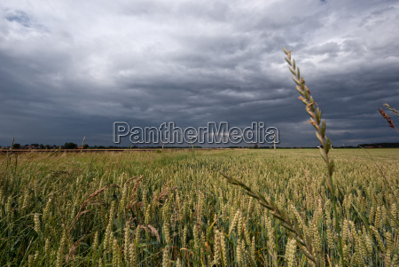 kornfeld and storms
