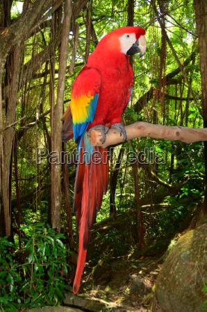 haustier vogel kuscheltier federn farbenfreudig farbreich