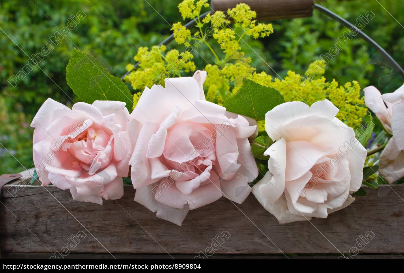 rosen - 8909804