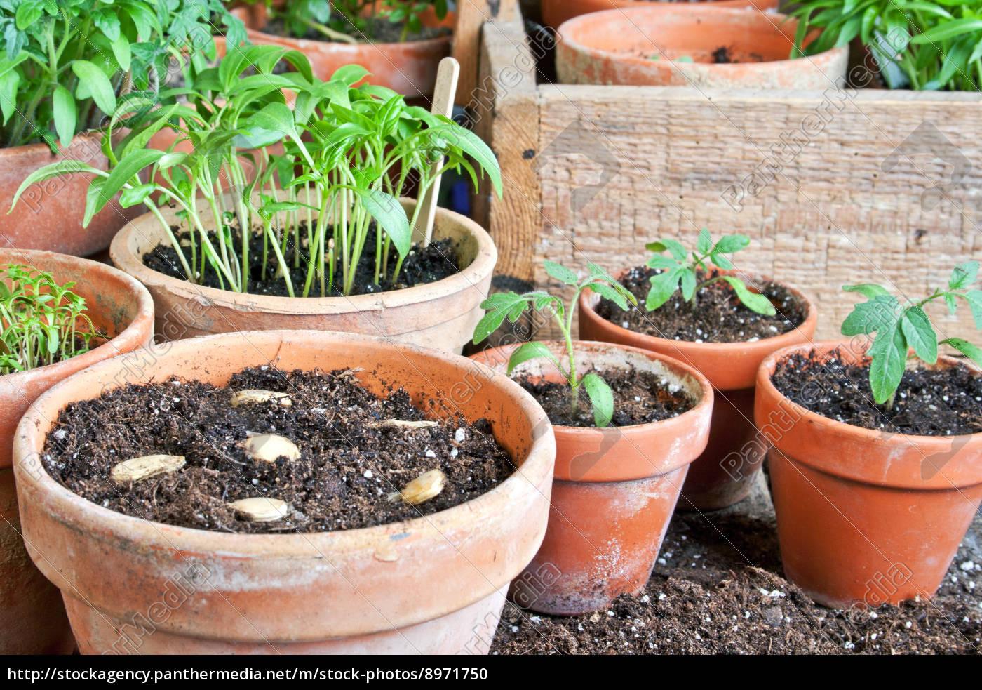 pflanzen - 8971750