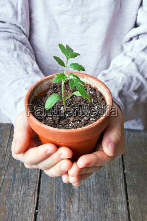 hand hands garden plant green wood