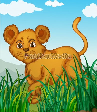 a cub in nature