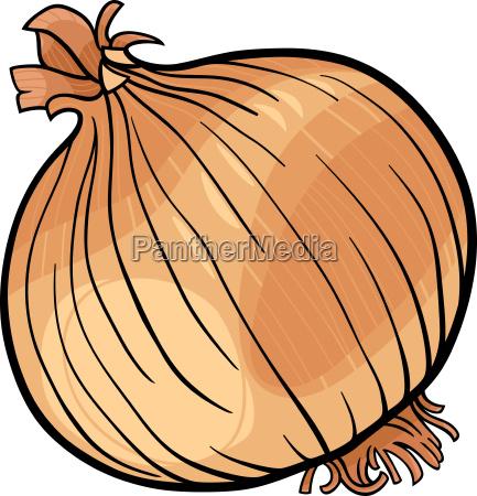onion vegetable cartoon illustration