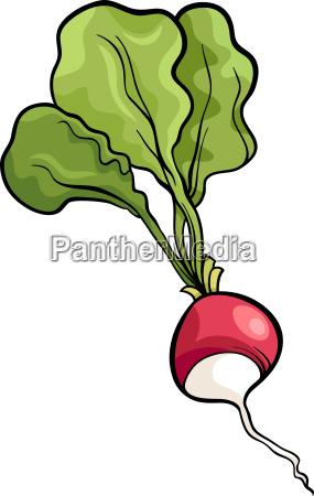 radish vegetable cartoon illustration