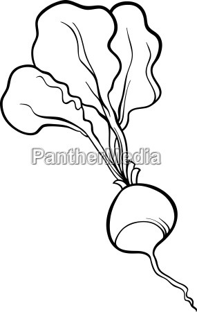 radish vegetable cartoon for coloring book