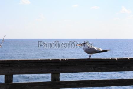 seagull watching fishing pole