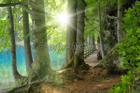 sunshine in the woods next to