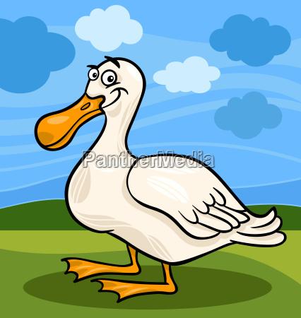 duck bird farm animal cartoon illustration