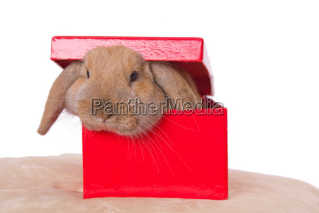 box gift present christmas birthday pet