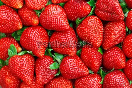erdbeeren hintergrund